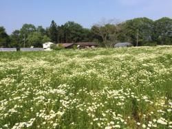 Ainosato Herb Garden