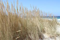 Praia da Arda