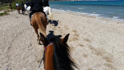 A Cavallu