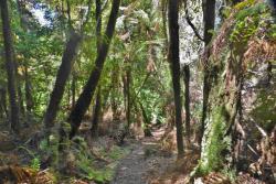 Mt Ngongotaha Jubilee Track