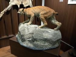 """Muzeul de Vânătoare """"August von Spiess"""""""