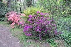 Arboretum SGGW