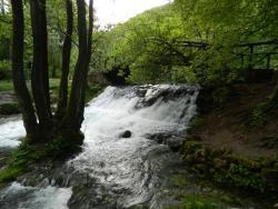 Spring of Bosna