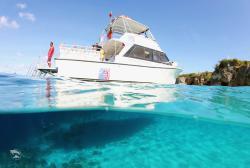 Ocean Encounters Diving