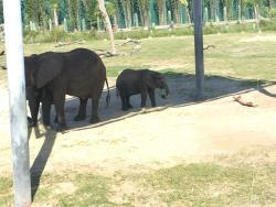 ローリーパーク動物園