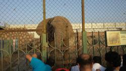 Taif Zoo