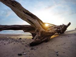 Shaka Beach Retreat