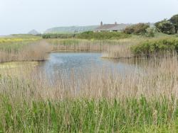 The National Trust for Jersey Wetland Centre
