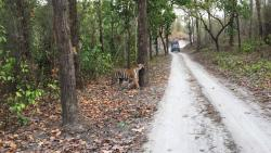 The ONLY Perfect stay in Kanha