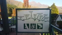 Zjazdy tyrolką i parki linowe