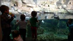 Great day at the aquarium with the grands!
