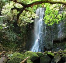 Matai Falls Walk