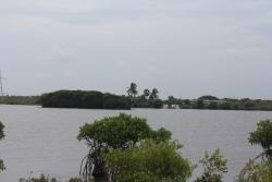Pitchavaram Backwater