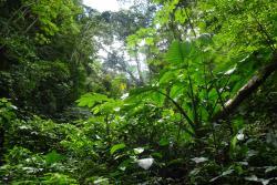 Asociacion de Proteccion de Flora y Fauna