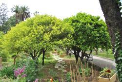 Jardin du Palais Carnolès
