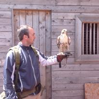 Fun With Falcons