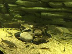 Danuri Aquarium