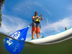 Surfari Stand Up Paddle & Surf