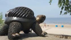 Brunurupucis (The Turtle)