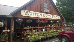 Whitney's Farm Stand