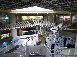 Tohoku University of Natural History