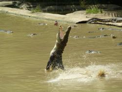 Jong's Crocodile Farm & Zoo