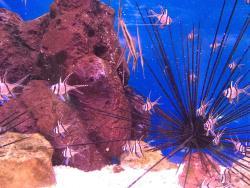 Teradomari Aquarium