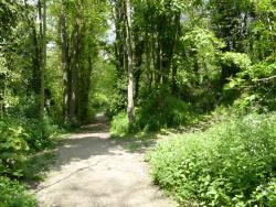 Danby Wood