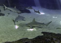 Shark Dive Maui