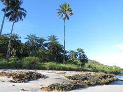 Praia da Pedra Mole