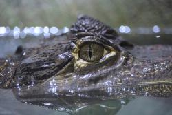 Askham Bryan Wildlife & Conservation Park
