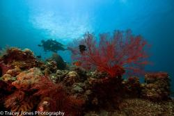 Amazing reefs and marine life diversity! Come and dive Amed & its surroundings.