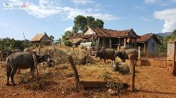 Jerai Village