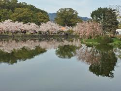 Ogi Park