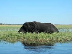 Cape Fig Safaris Chobe Botswana