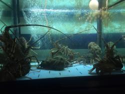 Trattoria Octopus