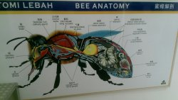 Bees Museum