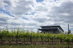 Megalomaniac Winery
