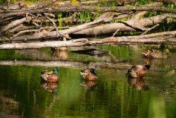 Mclane Creek Nature Trail