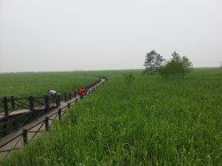 Xisha Wetland Park