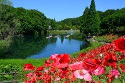 Hana Festa Memorial Park