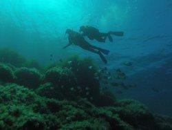 Bluelba Diving