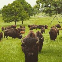 Woolaroc Museum & Wildlife Preserve