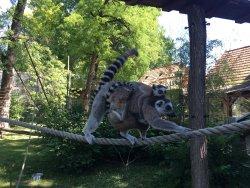 Zoo Gyor