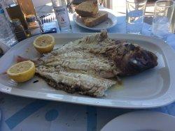 Greek Traditional Fish Tavern
