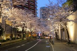 Roppongi Sakurazaka