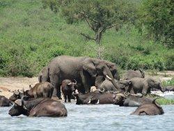 Africa Adventures Safaris