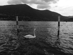 Navigazione Lago d'Iseo