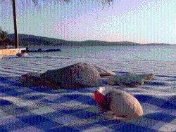 DiSa-Travel Lesbos