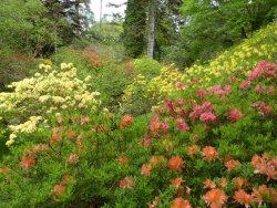 Crarae Garden Argyll